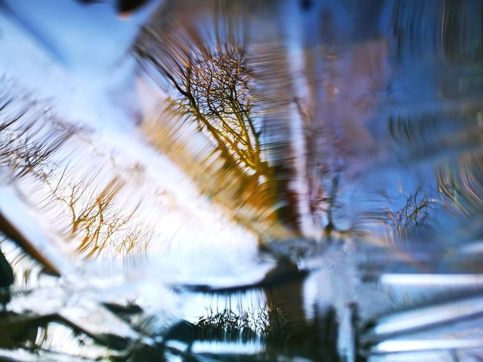 Ice Leicester Garden Photography Hometown My Garden Morning Light Winter Morning Tree Water Winter Cold Temperature Bare Tree Reflection Close-up Sky