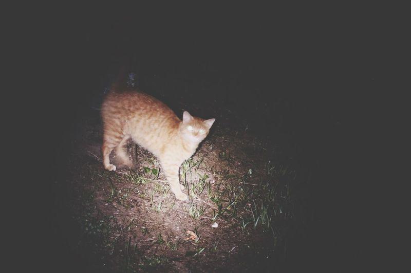 Eyes Cat Dark Cats Minimalism Ominous Night View Lights Creative Light And Shadow Pastel