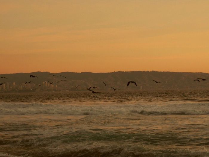 Waves Waves, Ocean, Nature Birds In Flight Birds And Sea Sunset At The Beach Sunset And Sea Sunset Silhouettes Pastel Colors Hills Silhouettes Of A City Coastline Capture The Moment Birds Flying Low Reñaca Beach , Chile