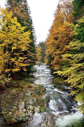 River. Tree Nature Growth Autumn Outdoors Beauty In Nature Scenics Tranquility Water Sky Clear Sky Tranquil Scene No People The Way Forward Day Stream - Flowing Water Travel Europe Mountains WoodLand