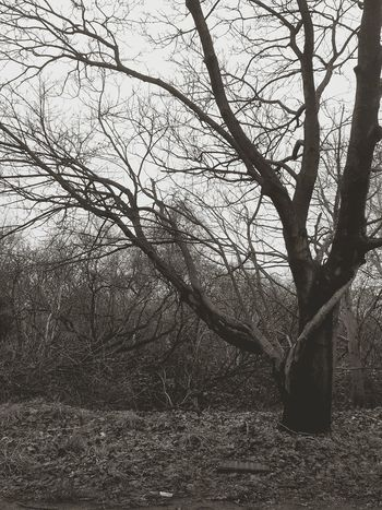 Bnwphotography Tree Nature Growth Sky Beauty In Nature Branch No People Tranquility Bare Tree Outdoors Day Bleak Landscape