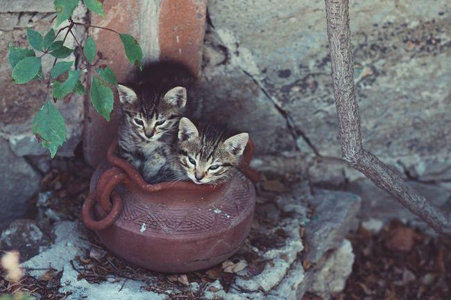 Cat Animals Pet