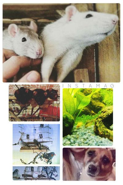 Meine tierchen Home Aquarium Animals Pet Birds🐦⛅ Cutie Zebrafinken Sweet Rattie Dog❤ Rat ᴘʜᴏᴛᴏ ᴊᴀᴄᴋʀᴜssᴇʟ Birds Fish Animal Aquarium Life Rats Ratte Ratstagram Bird Eyeem X Whitewall: Animals