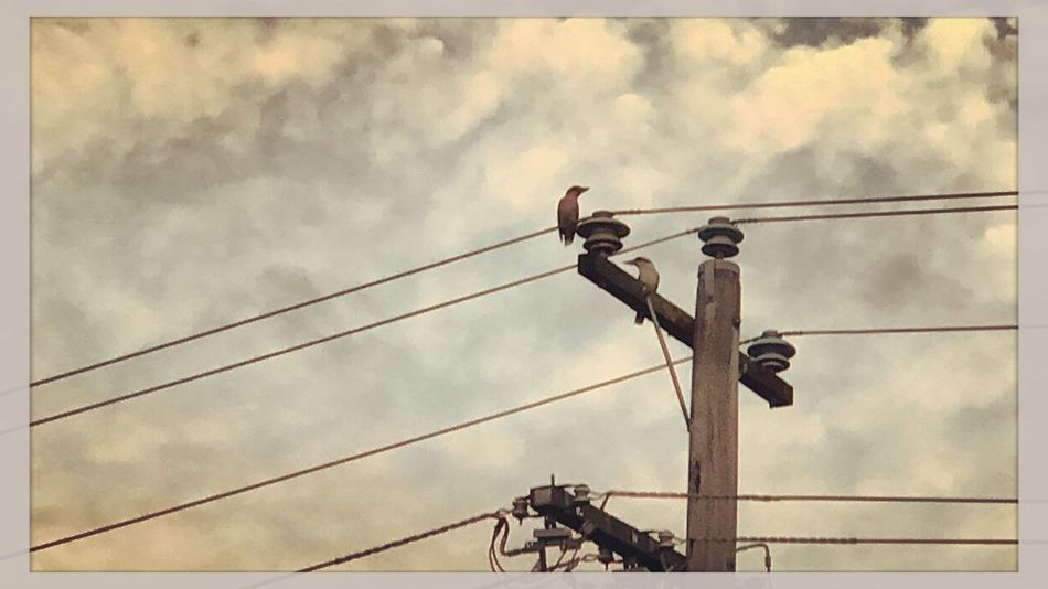Just some kookaburras chilling on the land post 🐦🐦 Kookaburras Kookaburra Birds Landpost Clouds Nature MyPhotography