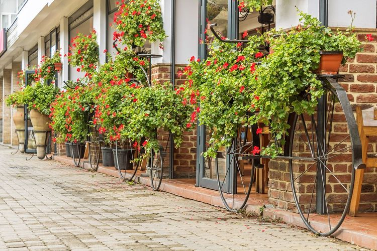 Potted plants on sidewalk by building