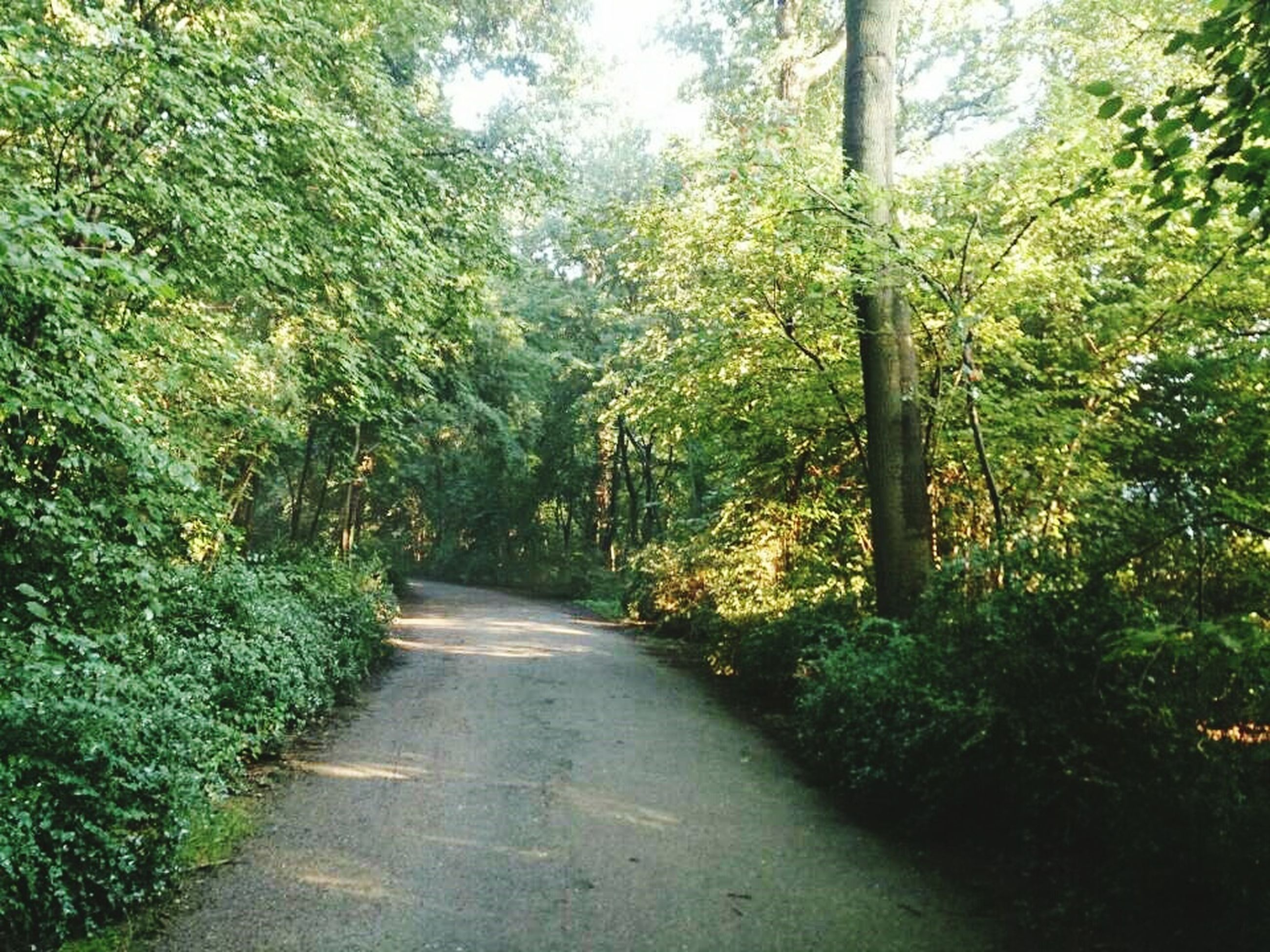 the way forward, tree, diminishing perspective, tranquility, growth, vanishing point, footpath, green color, narrow, nature, tranquil scene, road, plant, dirt road, forest, beauty in nature, pathway, sunlight, day, scenics