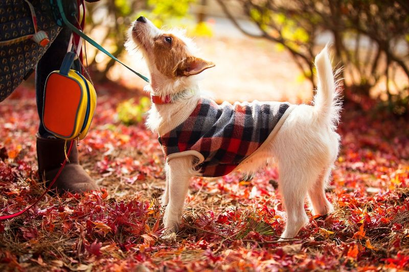 Full Length View Of Dog During Autumn