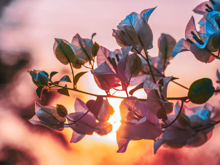 happy v day Plant Beauty In Nature Flowering Plant Flower Growth Nature No People Close-up Plant Part Vulnerability  Leaf Freshness Fragility Branch Outdoors Sky Sunset Day Petal Selective Focus Valentine's Day  Valentine