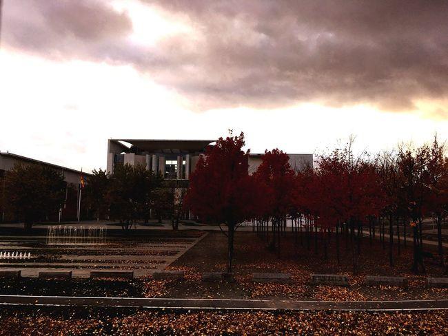 Berlin Tree Nature Outdoors Beauty In Nature Building Exterior Dark Moody