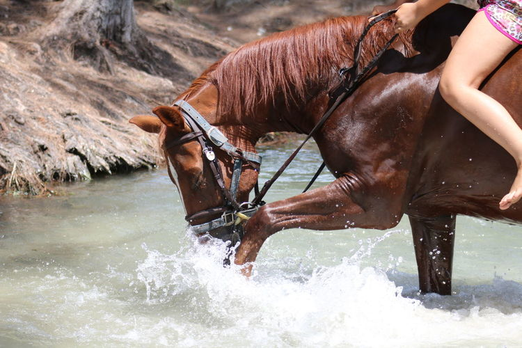 Low section of woman riding on horse over stream
