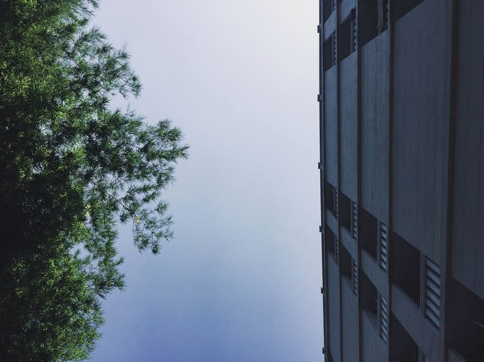 Directly below shot of trees and building against clear sky