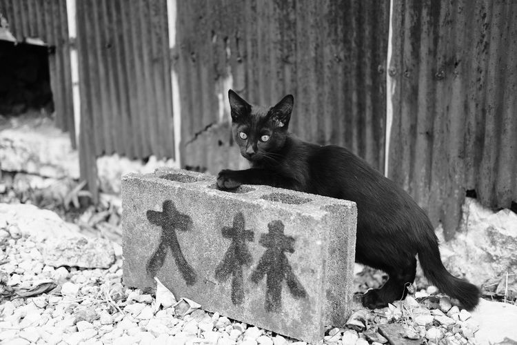 Monochrome Blackandwhite Cat Streetphotography