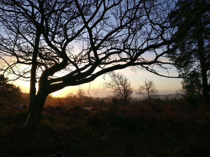 February sunrise Sunrise Tree Nature Beauty In Nature Silhouette No People Sky