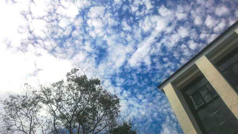 Sky And Clouds Sky Blue Tree Architecture College Buildings Architecture