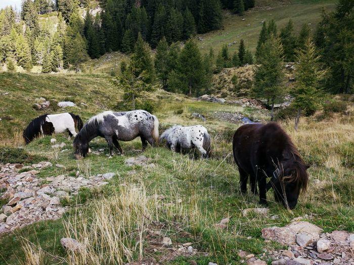 Cows grazing in a field