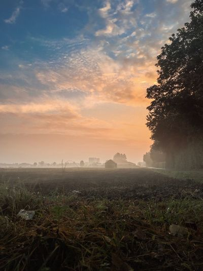 Nature Beauty In Nature Growth Tree Tranquility Tranquil Scene Scenics Sky Field No People Landscape Sunset Outdoors Agriculture Day Foggy Morning Foggy Weather Neu-Ulm