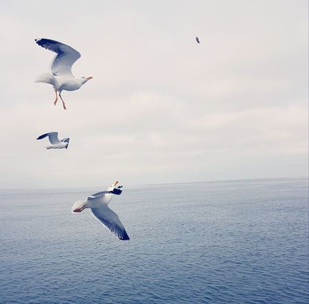 Gulls Outside Clouds And Sky Air Bird EyeEm Selects Spread Wings Flying Full Length Sea Water Mid-air Motion Sea Bird