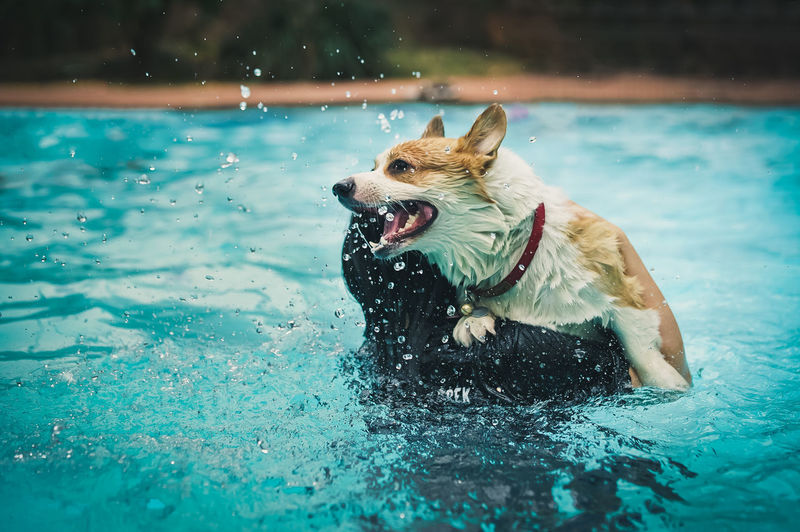 High angle view of dog in swimming pool