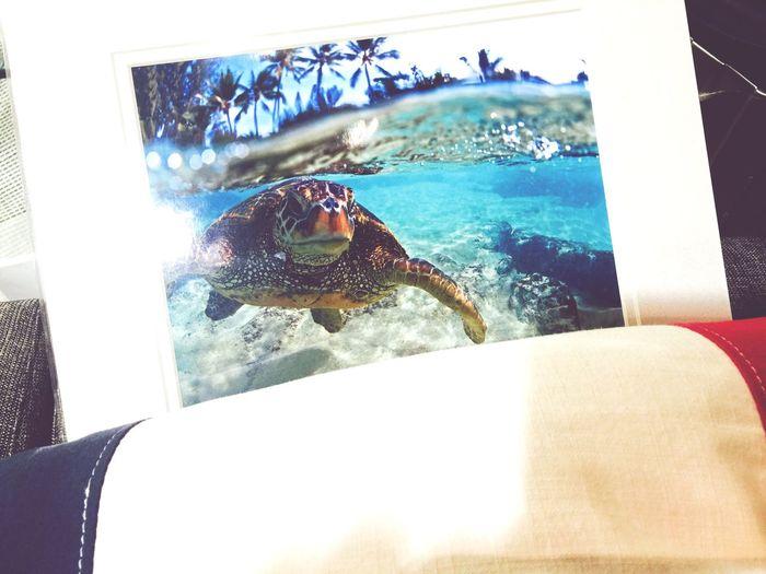 めっちゃいい写真売ってて衝動買い… #ClarkLittle Clark ClarkLittle Seaturtle Ocean View Seashore Surfer Surfing Beach Beachphotography Shopping