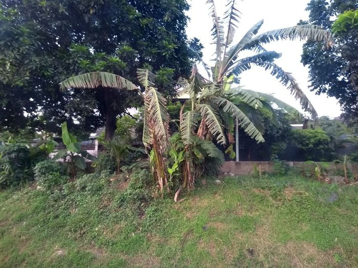 View of palm trees in field