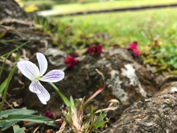 Flower Fragility Growth Petal Nature Flower Head Beauty In Nature Blooming No People Outdoors Focus On Foreground Close-up Green Color Plant Freshness Field Day Leaf Crocus
