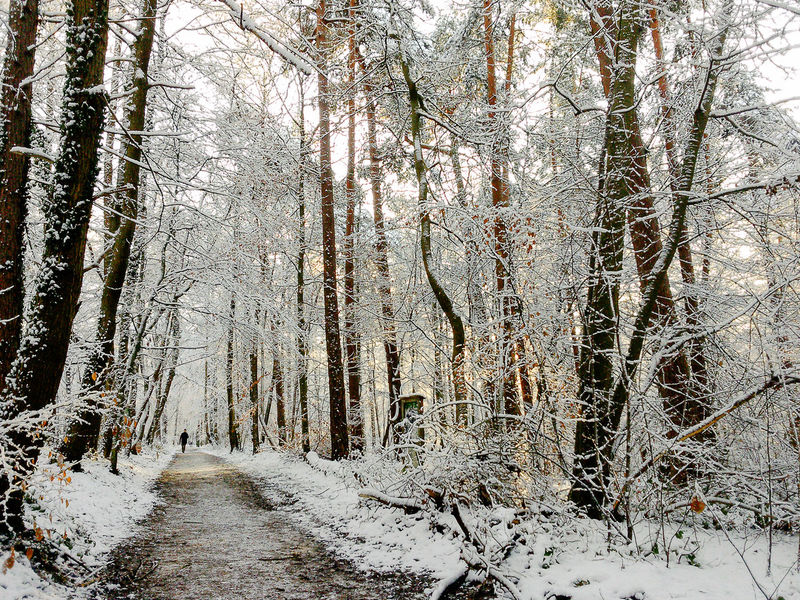 Beauty In Nature Cold Temperature Day Forest Forêt De Soignes Hiking Nature Outdoors Snow Sonian Forest Silhouette Nature_collection Trees Golden Hour Bare Tree Branch The Great Outdoors Tree Winter Finding New Frontiers