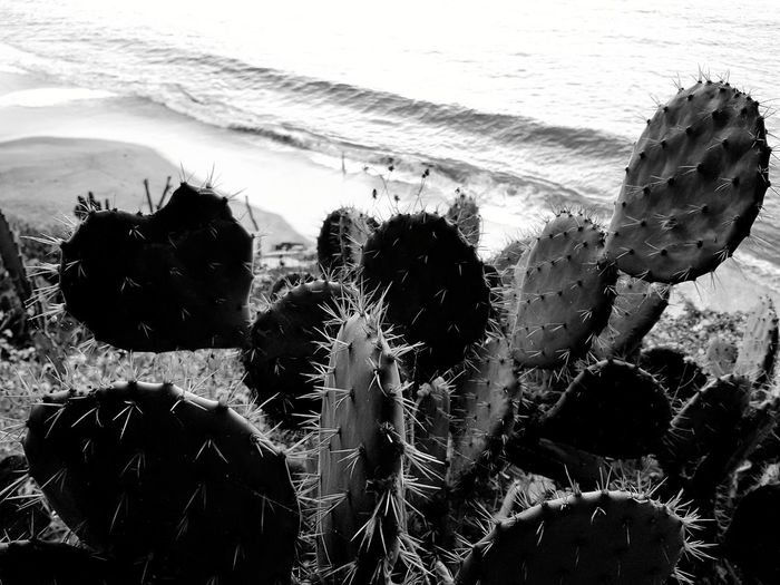 Beach Water Sand Day Sea Nature Black & White Vacations Mexico De Mis Amores Nopales
