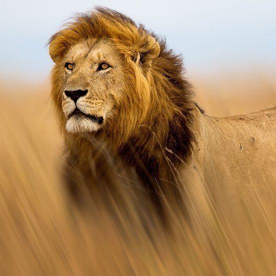 Bad #Lion #old Sternzeichen On Love 💀🎶〰🌸👽