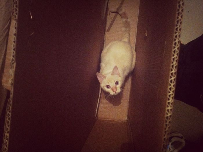 Cat In The Box (literally)