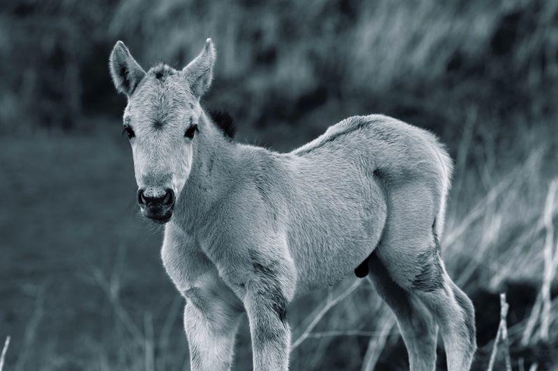 Portrait of foal standing on field