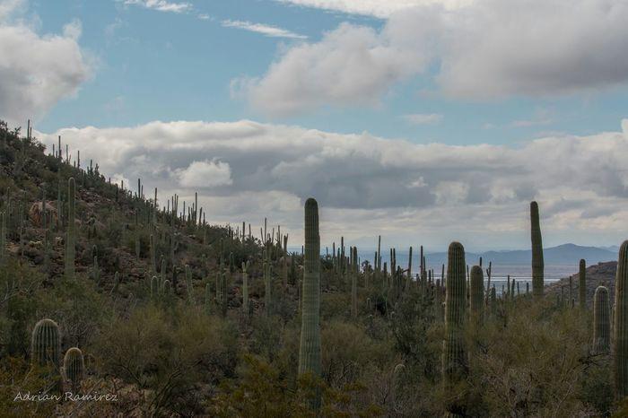 Landscape Clouds Carnegiea Gigantea