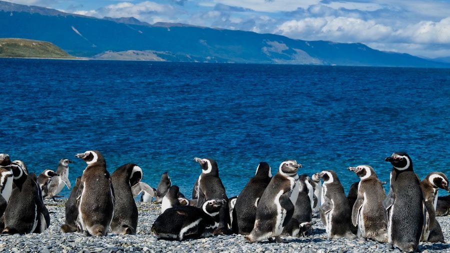 Antarctica Tierra Del Fuego Ushuaia Argentina Animal Themes Animal Wildlife Animals In The Wild Argentina Beauty In Nature Large Group Of Animals Nature Outdoors Penguin Sea Sky Water