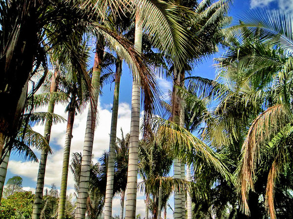 Gardens Eyeem Garden Beauty In Nature Day Garden Photography Growth Low Angle View Nature No People Palm Tree Scenics Sky Tree Tree Trunk