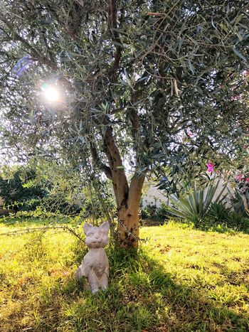 Elios Flowers Gianni Lo Turco Tranquility Nature Outdoors Sunset Sunlight Growth Tree Grass Field Nature No People Tranquility Sunlight Day Beauty In Nature Scenics Landscape Illuminated Sky Sunny Tranquil Scene Beauty In Nature Nature Photography