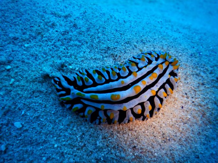 Underwater beauty EyeEm Selects Sea Life Underwater Sea UnderSea Animal Themes Animals In The Wild One Animal Animal Wildlife No People Nature Tentacle Coral Sea Anemone Clown Fish Water Outdoors Close-up Day Scuba Diving Beauty In Nature