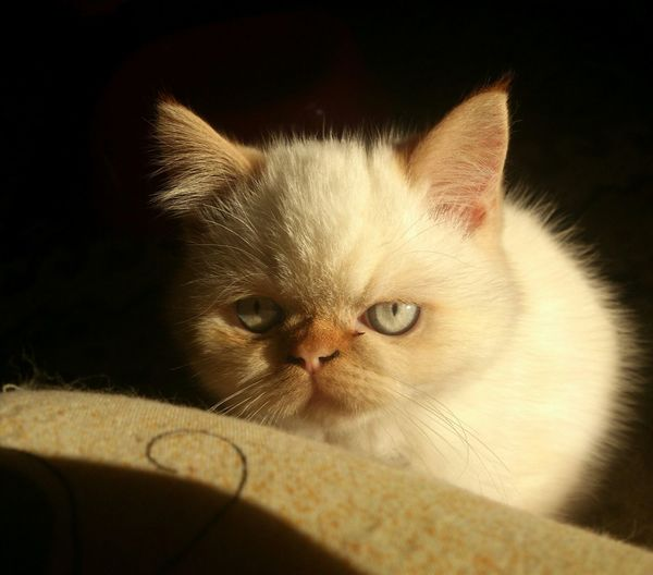 Cat Kitten Cute Animals