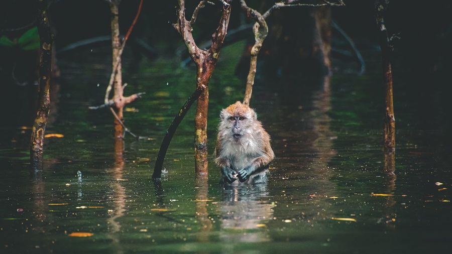 View of monkey swimming in lake