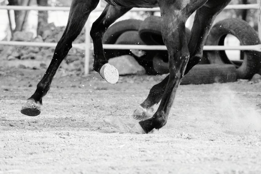 Horse lend us the wings we lack. Low Section Outdoors Day Animals Fresh On Eyeem  Horses Horse Riding Monochrome Photography