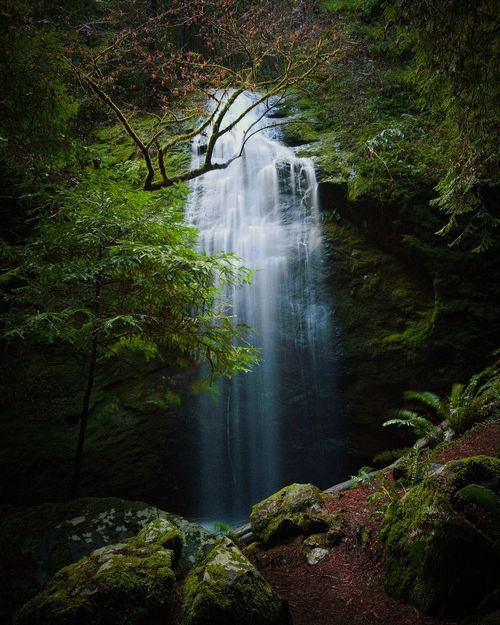 A long exposure at Chamberlain Creek falls in Mendocino California Water Tree