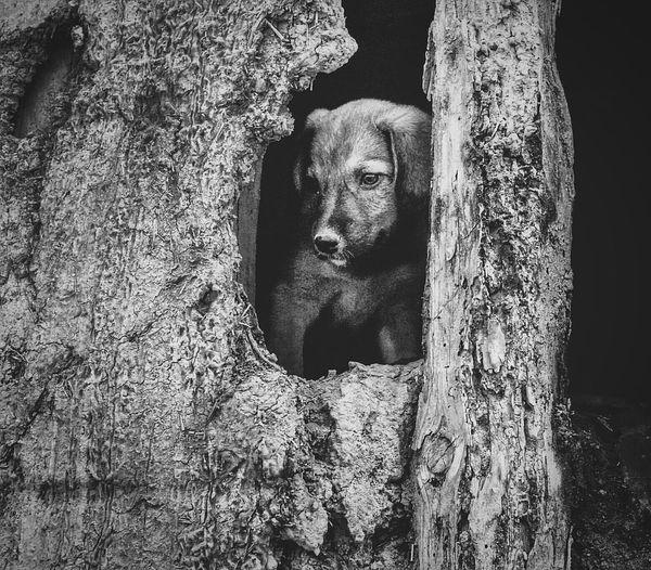 Desolation Wrecks Derelict Puppy Dog Sakarya Taraklı The Street Photographer - 2017 EyeEm Awards The Portraitist - 2017 EyeEm Awards EyeEmNewHere The Photojournalist - 2017 EyeEm Awards Place Of Heart