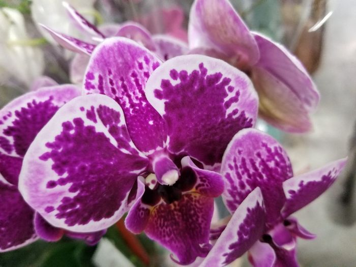 Flower Purple Petal Nature Fragility Plant Close-up Beauty In Nature Flower Head Freshness Growth No People Pink Color Outdoors Springtime Orchid Tranquility Growth Beauty Beauty In Nature Union Square  Ynot Cellphonephotography S8plus GalaxyS8+