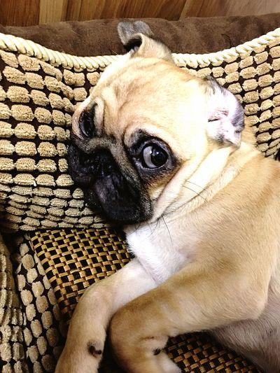 Puppy! First Eyeem Photo