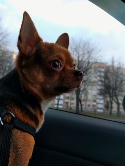 Close-up of puppy in car