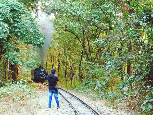 Photographer In Action Heritage Ride Lifestyles Beauty In Nature Standing One Person Real People Tree Woods Traveling Travel Photography Outdoors Toy Train Toy Train Engine Toy Train Track EyeEmNewHere Neighborhood Map