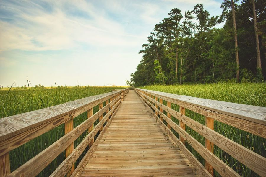 River Walk Swamp Swamplife Riverside Photography Freshness Tall Grass Outdoor Life Traveling Tranquility Leland Wilmington NC The Great Outdoors - 2017 EyeEm Awards Sommergefühle EyeEm Selects The Great Outdoors - 2018 EyeEm Awards The Traveler - 2018 EyeEm Awards