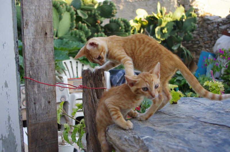 GREECE ♥♥ Griechenland Griechische Inseln Amorgos Amorgosisland Animal Themes Cat Day Domestic Animals Domestic Cat Greece Mammal Nature No People Outdoors Tree