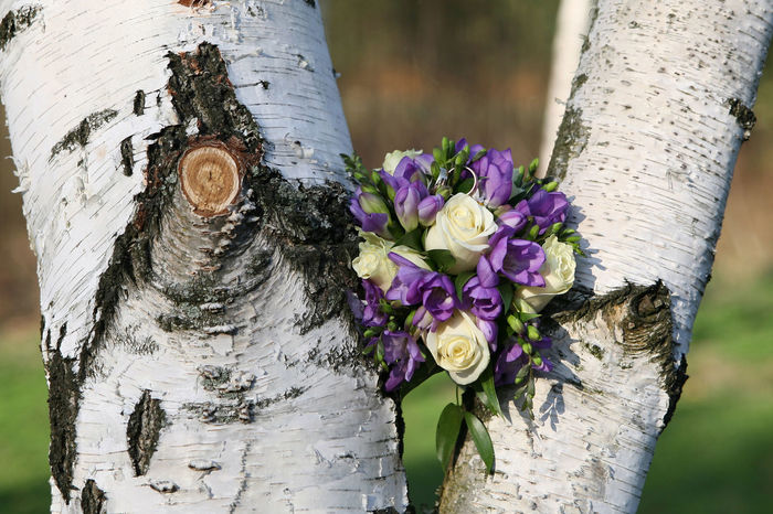 Barks Of A Tree Birch Bouquet Of Flowers Roses Summer Wedding Wedding Bouquet Wedding Flowers Wedding Rings Wood