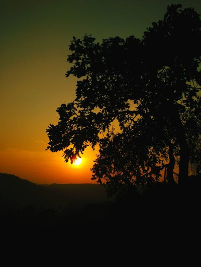 Orange green sunset tree silhouette. Sunset Tree Silhouette Igniting Beauty In Nature Nature Outdoors Good Evening End Of The Day Dusk Close Of Day Ponda Eye4photography  EyeEm Nature Lover Sunset_collection Goa Sunsets Sunset Silhouette Dramatic Lighting Poetic Imagery EyeEm Best Shots Dramatic Edit DOPE Artistic Photography Wallpaper Welcome To Black Mix Yourself A Good Time
