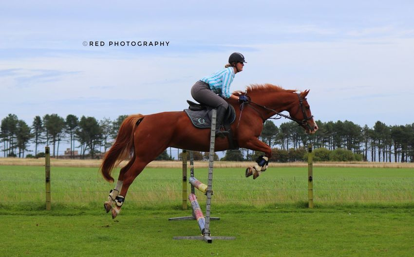 The Jump Animals Jumping Shot Horseriding Horse Photography  Portrait Of A Woman Photographylovers Aberdeenshire Nature Photography Horse Love Horse <3 Horses Horse Life Horsestagram Horse Photography  Jump Jumping Horsejumping Equestrian Mammal Pets Activity Real People Nature Horseback Riding Sport