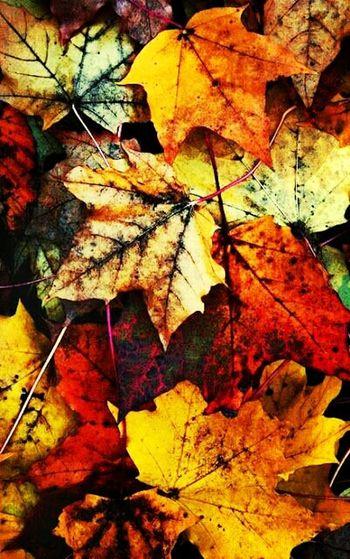 Fall!!!!